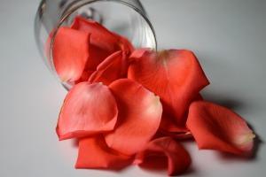 Virag_rose-petals-977090_1920