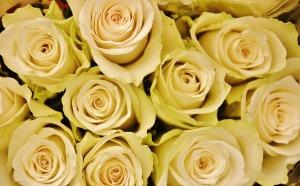 virag_flower-366159_1920